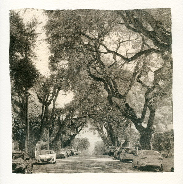 024 Tree-lined Street 2018 Sara Yerkes_1